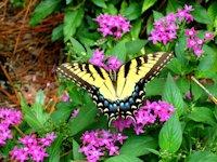 5Savannah_National_Wildlife