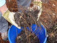 potting_soil